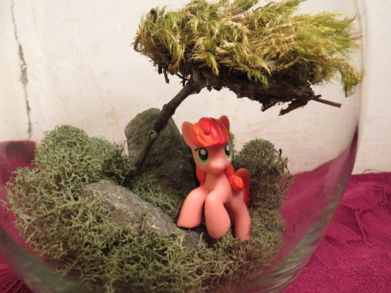my_little_pony_pepperdance_terrarium__close__by_brenlysoddiments-d5dpyee