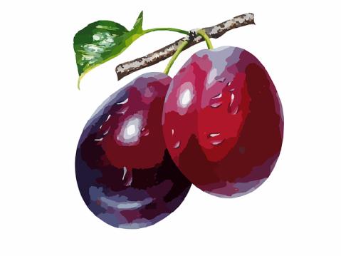 plums-297025_640
