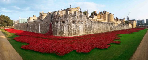 Tower of London Poppy